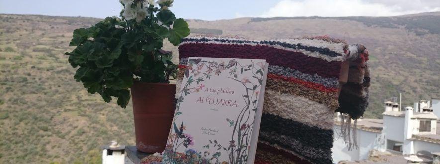Regala un libro una flor y una jarapa en el día de San Jorge
