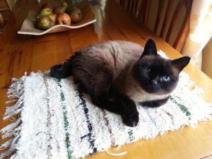 Jarapa de baño, tambien para gatos jeje