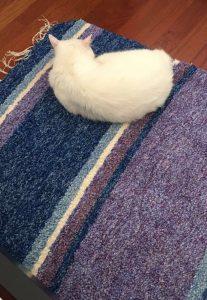 El gato buscando el mejor sitio de la casa, encima de la jarapa